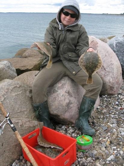 fladfisk, gulp orm til molefiskeri