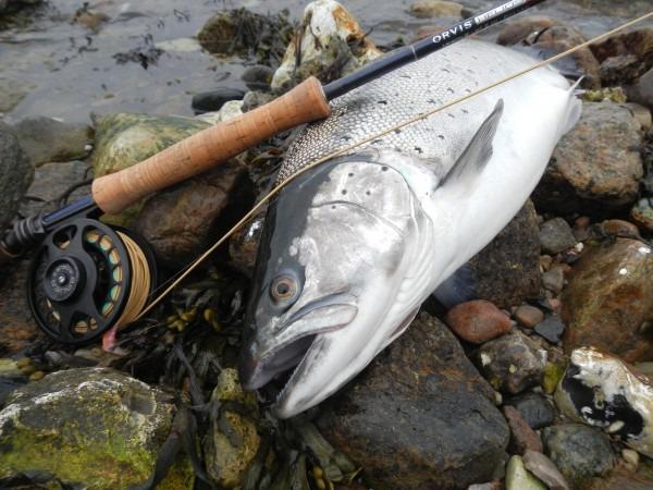 seatroutguide fishing guide funen ceertificeret fiskeguide jesper lindquist andersen