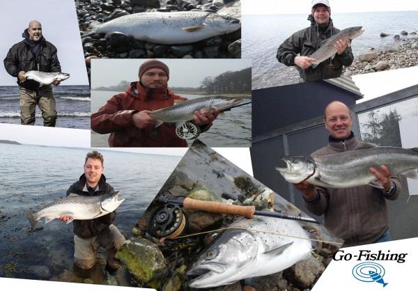 havørred, kystfiskeri, seatrout fishing, fishing guide