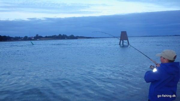 Så er der atter en minitun på. Bemærk uroen på overfladen på begge sider af den grønne bøje - Makreller....