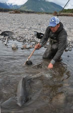 kongelaks på flue Skeena river getaway tours go fishing